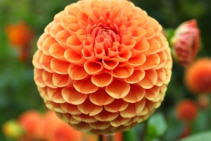 oct 16  flower 2