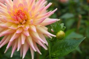 oct 16  flower