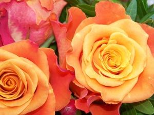 oct 16  rose