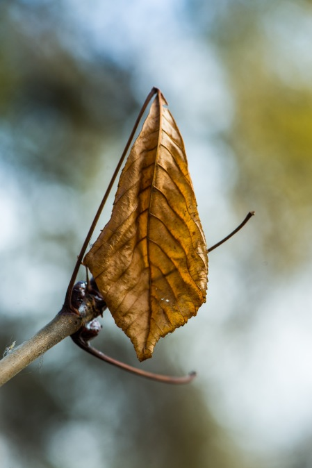 Autumn e