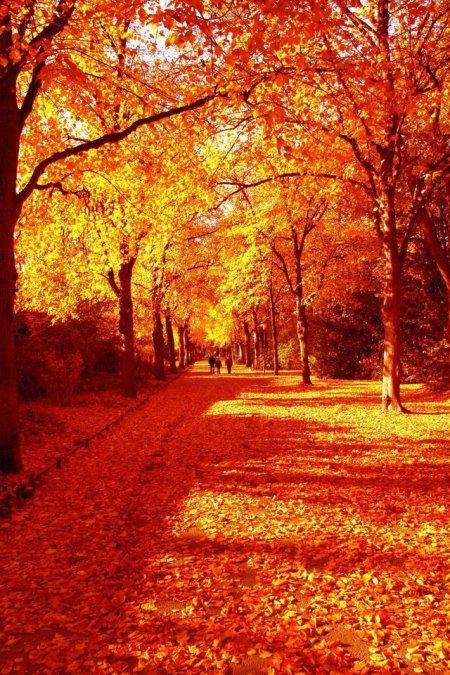 autumn-1401941-640x960