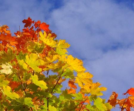 autumn-1464830-639x531
