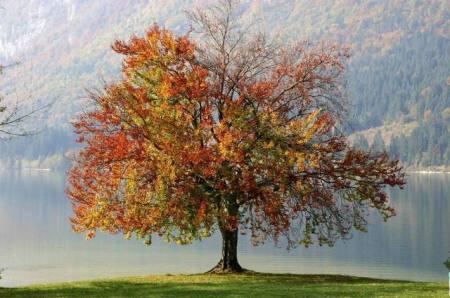 autumn-tree-1408307-640x425