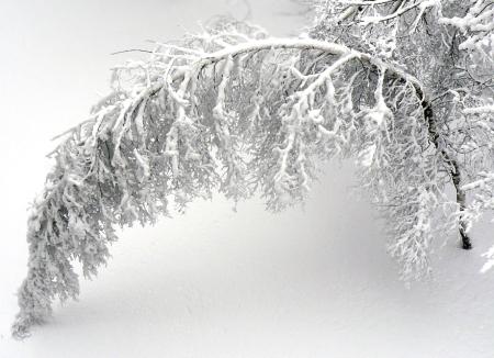 snow-in-april-1374810