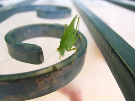 cricket-1364093