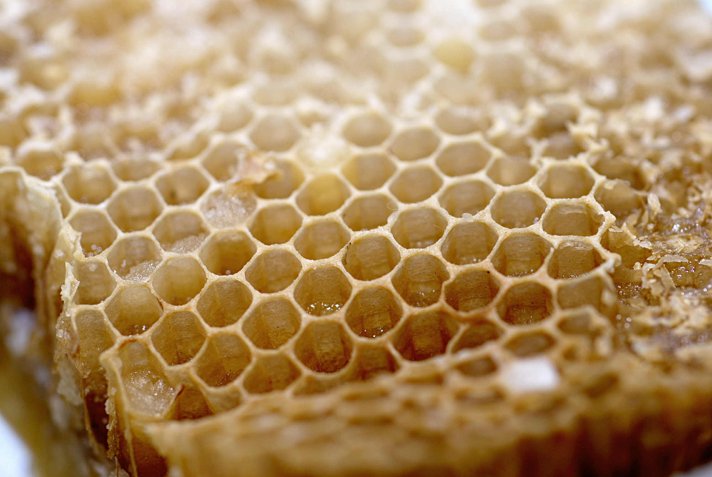 effects on honey bees research paper