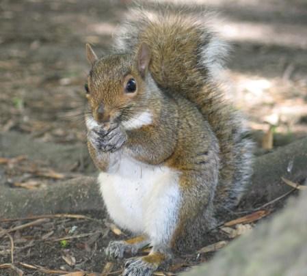 it-s-a-squirrel-1410688