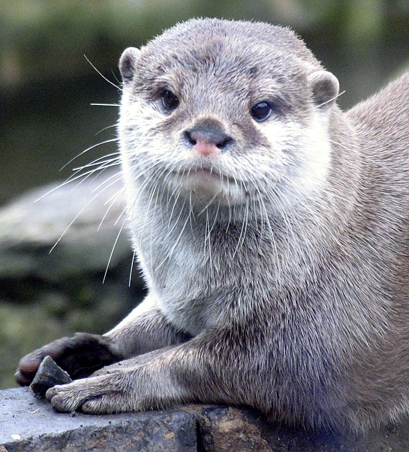 otter-playing-1533985