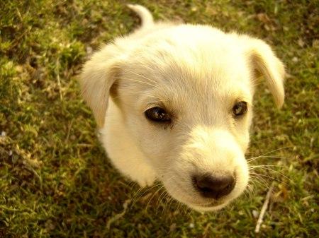 puppy-1400778