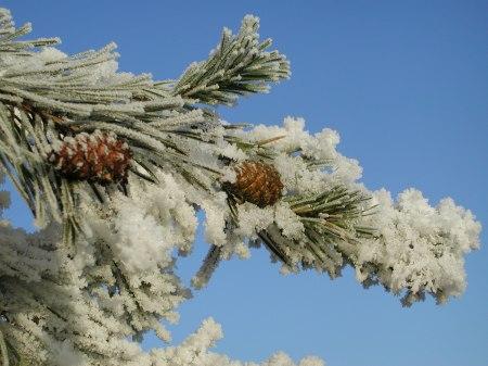 winter-1-1518871